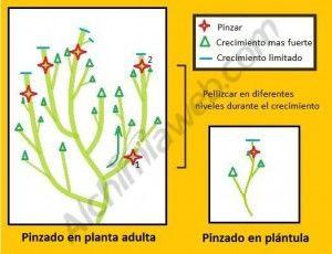 Pinzar2