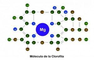 269-magnesio-nutriente-marihuana-02