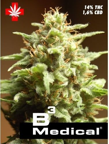 2947_b3--medical-pure-seeds-piensa-en-verde