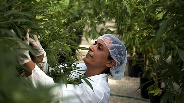 marihuana-medicinal-israel