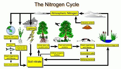 nitrogen_cycle_diag