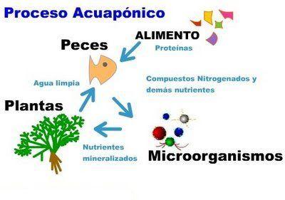 proceso_acuaponia