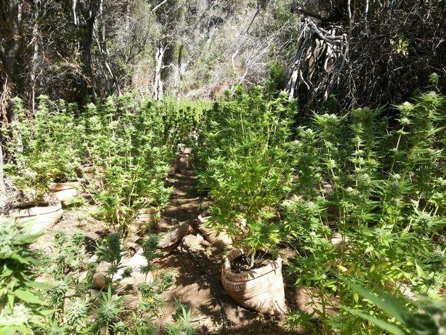 15-03-15-marihuana
