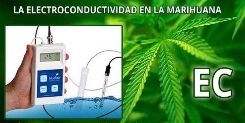 La-Electroconductividad-EC-en-el-cultivo-de-marihuana