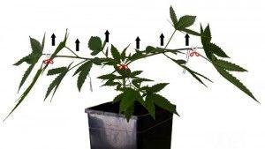 planta-madre-moldeada
