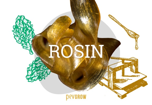 What is Rosin and how is it made? Rosin Tech Method