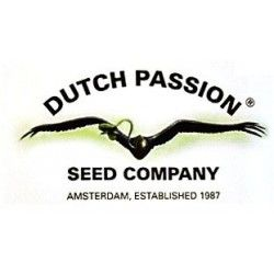 semillas-dutch-passion-regular