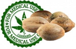 Familia-Semillas-cannabis-Medicinal