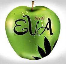 Logo-Eva-Seeds