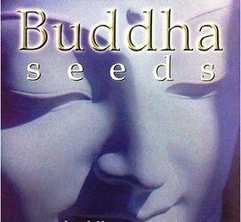 buddha-seeds_logo5-web