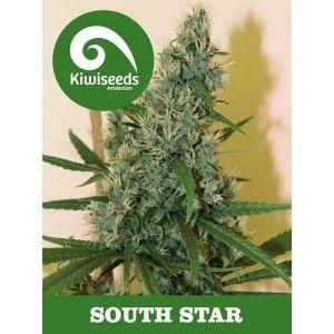 south-star-kiwi-seeds