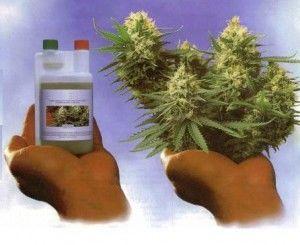 nutrientes-para-la-marihuana