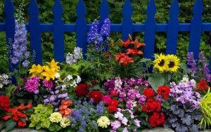 Sabores florales