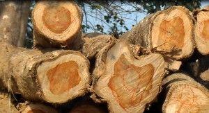 Saveur au bois