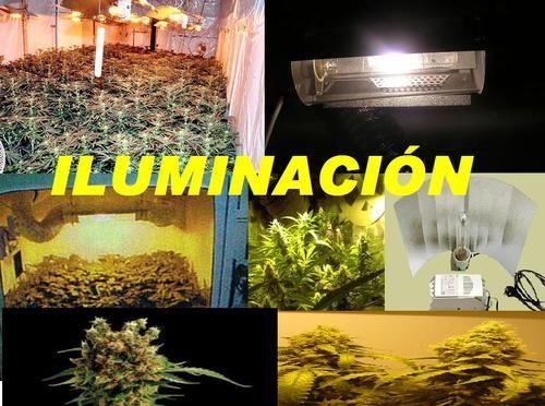 La mejor iluminación del cultivo de marihuana interior - photo#20