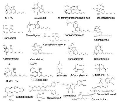 Chemical structure of cannabinoids