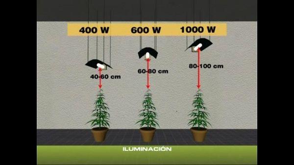 Le meilleur clairage d une culture de cannabis l 39 int rieur for Autofloraison interieur
