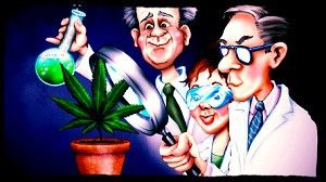 Medical studies of marijuana in Madrid