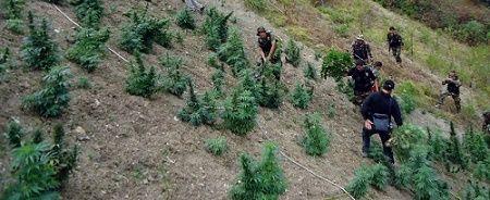 Se permite la posesión de hasta 8 gramos de marihuana