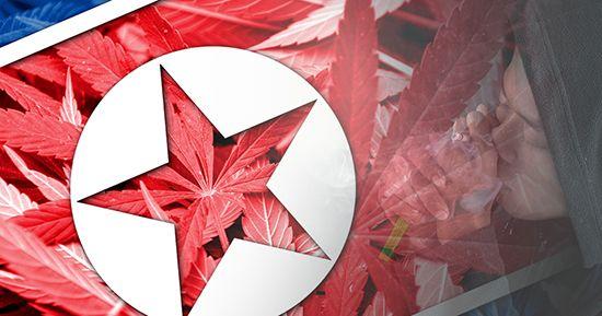 Corea del Norte: el país no considera el cannabis como una droga ilegal