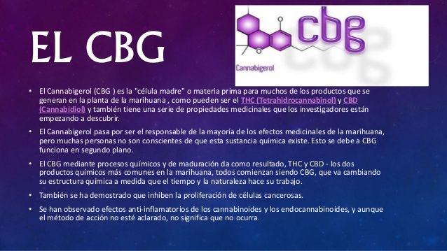CBG tiene importantes propiedades