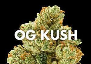 Historia de la variedad OG Kush