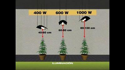 Mantener a una distancia mínima de las plantas