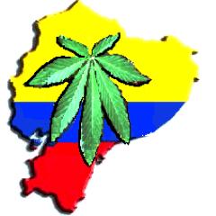 La marihuana en Ecuador