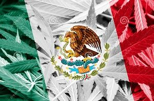 Marijuana in Mexico