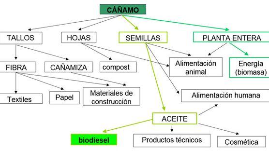 El cáñamo y sus derivados