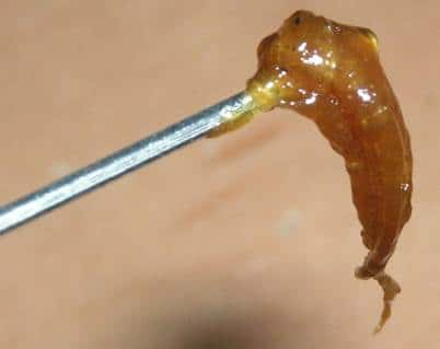 BHO extraction, using gas