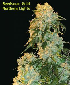 Northern-Lights-seedsman