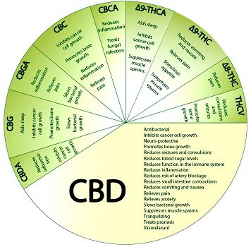 Scientific studies and clinical underscore the potential of CBD