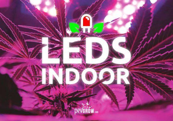 LED-Beleuchtung in meinem Cannabis-Indoor-Anbau.