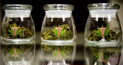 La marijuana médicale dans les pharmacies, Utopie ou réalité?