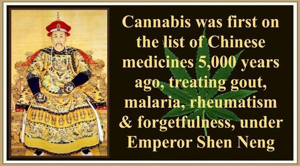 since 5000 years ago in China, they used the fruits of this plant for medicinal purposes