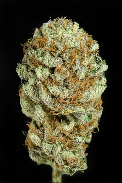 Blue Kush, Dinafem Seeds
