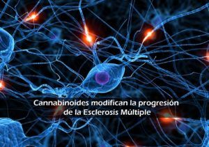 Cannabis and Multiple sclerosis (M.E): reducing the symptoms and stopping disease progression.