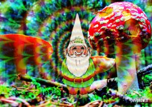 Discover all about the hallucinogenic mushrooms!