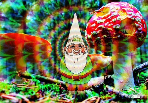 The world of hallucinogenic mushrooms