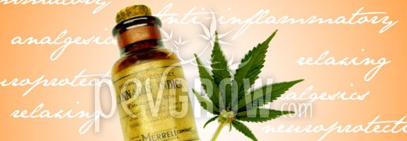 Cannabis oil has many properties for health.