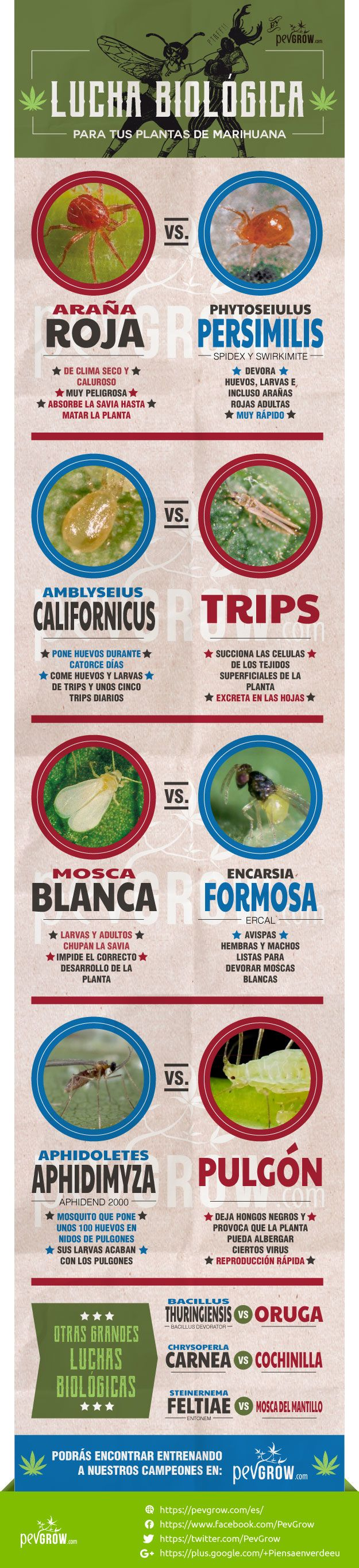 Infografia sobre las técnicas de lucha biológica
