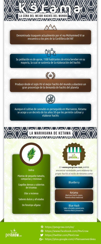 Infografia sobre La Marihuana de Ketama