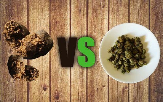 hachis v.s marihuana