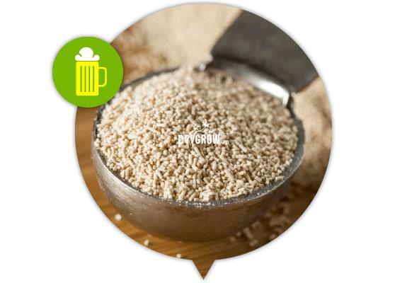 Brewer's yeast, rich in minerals, amino acids and proteins