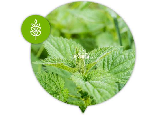 Nettle tea is a product that provides insect repellent plant active ingredients.