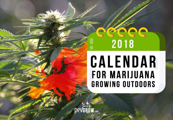Calendar 2018 for the outdoor marijuana growing in Europe