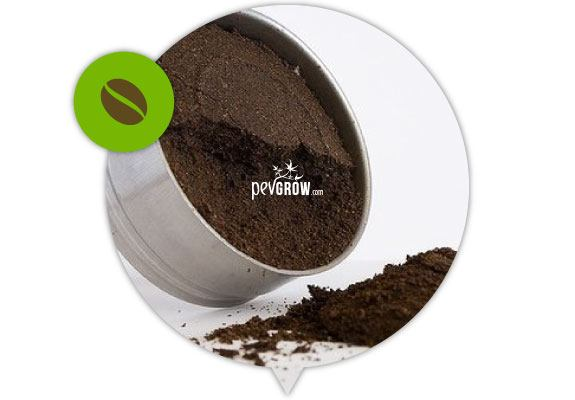 Coffee grounds, excellent fertilizer for the growth phase.