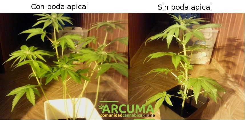 Vuestra planta rebosará salud!!
