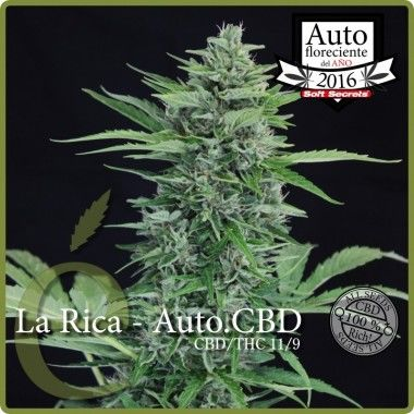 La Rica Auto CBD de Elite Seeds